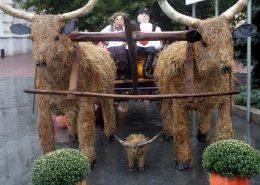 festivals Miskolc